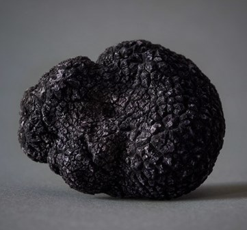 Black truffle Tasting menu at 120 €